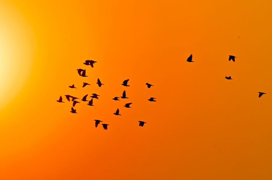 Birds flying together: Shared Leadership in action